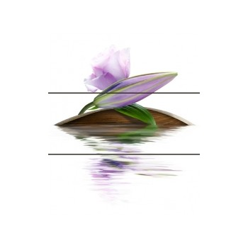 Violeta komplet 60x50