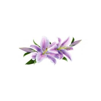 Violeta centro 20x50