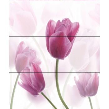 Tulipa Komplet 60x60