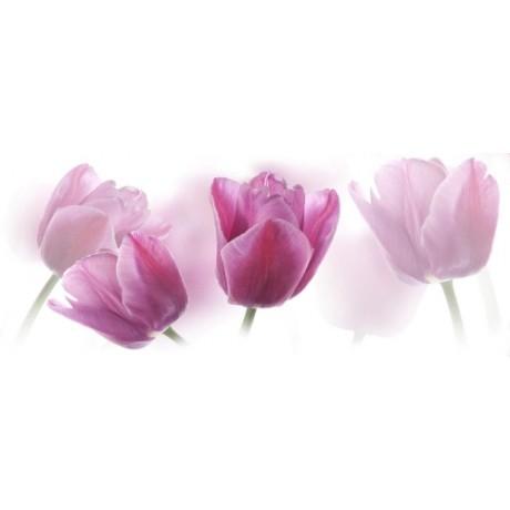 Tulipa Centro 20x50