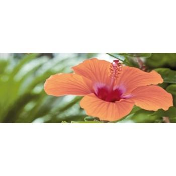 Flora centro 20x50