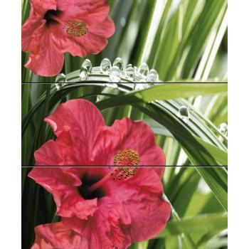 Hibiscus komplet 3*(20x50)