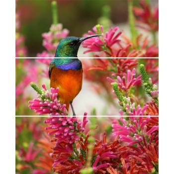 Koliber Rubin komplet 3*(20x50)