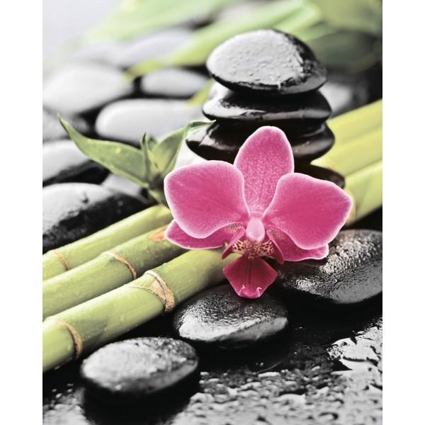 Bambu and Orchid komplet 3*(25x60)