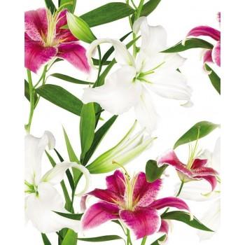 Lilium komplet 3*(25x60)