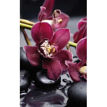 Orchid komplet 4*(20x50)