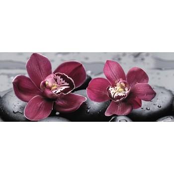 Orchid centro 20x50