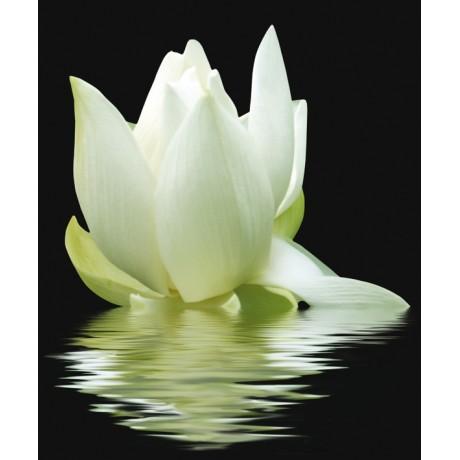 White Lilies komplet 3*(20x50)