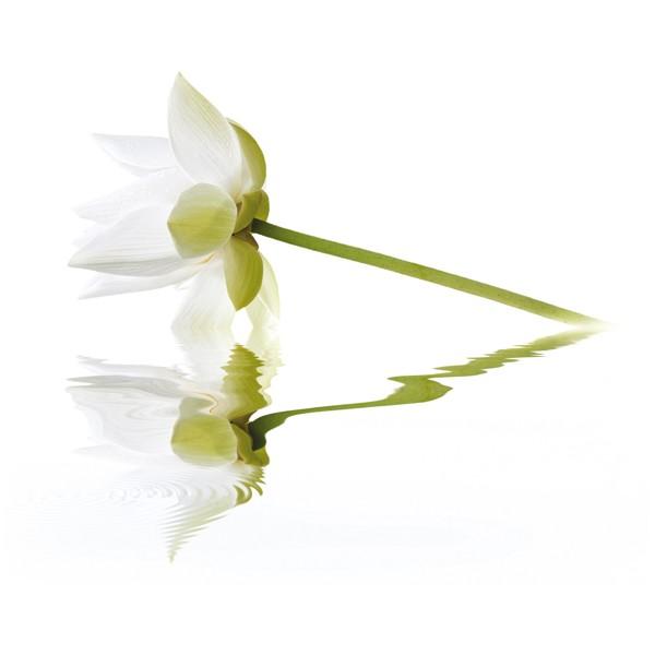 White Lilies komplet 2*(20x50)