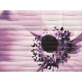 Maxima violet 2 89,8x67,3...